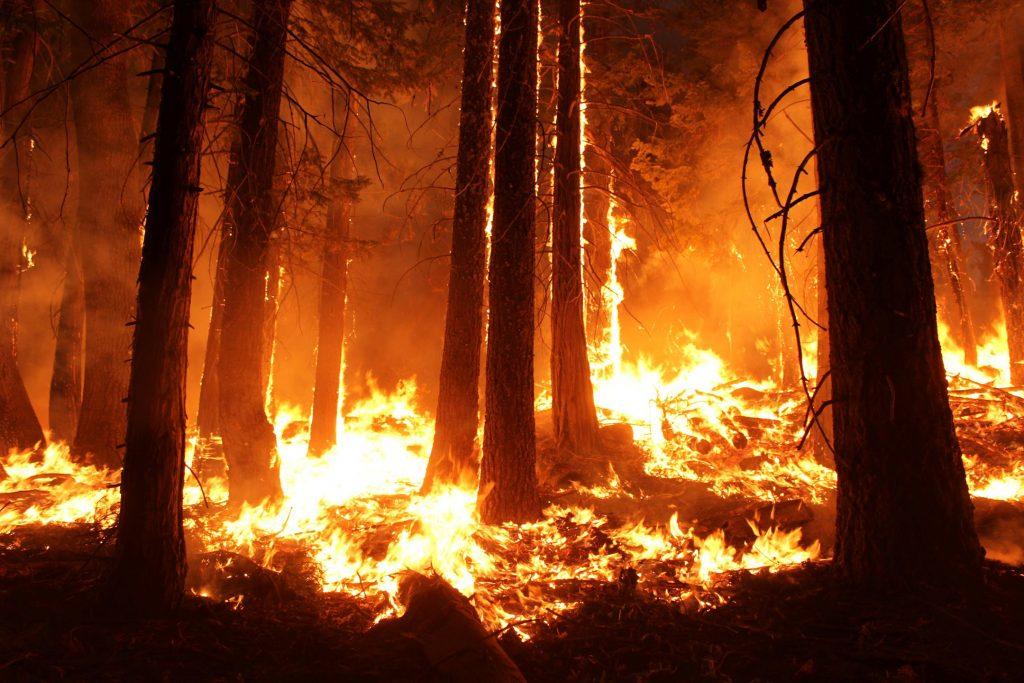 Wild fires California